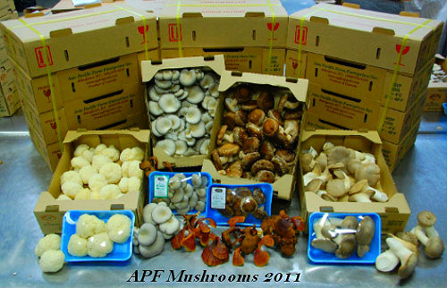 All Mushrooms of Asia Pacific Farm
